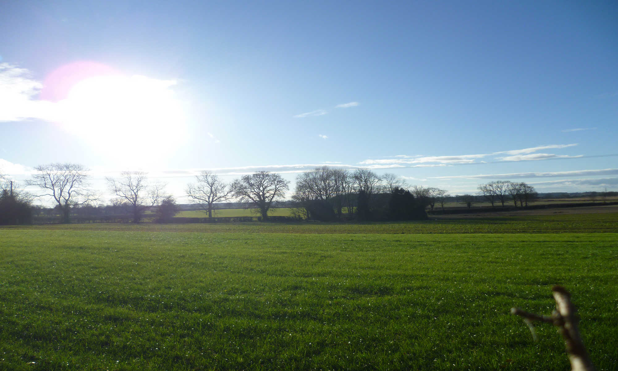 Farlington field