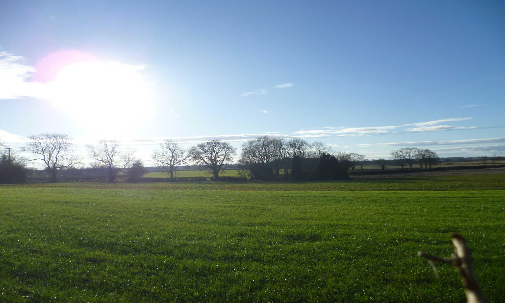 Farlington field