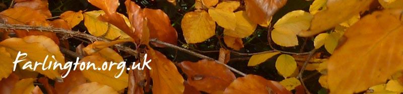Farlington Autumn