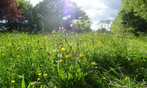 Farlington meadow